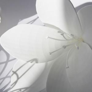fleurs decoration vitrine